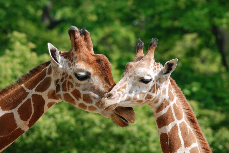 Zoo Salzburg - Ausflugsziel im Salzburger Land
